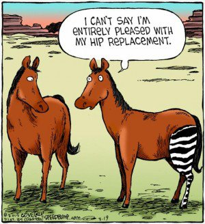 horse-hip-replacement