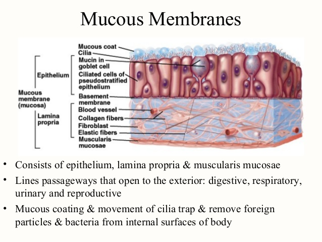 gonorrhea inflammation and mucous membranes Which drugs are absorbed through the mucous membranes of the nose and throat only drugs that are water soluble, or have a high water solubility, can be absorbed through mucous membranes examples of these are amphetamines, opiates, many add medications, cocaine, etc.